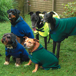 dog_coats_section